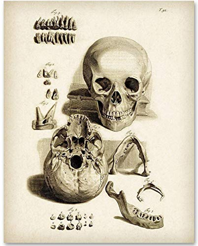 Skull and Teeth - 11x14 Unframed Art Print - Makes a Great Gift For Nurse's Day! ()