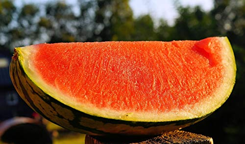 Home Comforts Canvas Print Delicious Refreshment Watermelon Food Melon Sweet Vivid Imagery Stretched Canvas 32 x 24