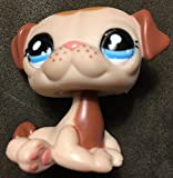 vintage littlest pet shop - Littlest Pet Shop Pug Dog Puppy #1753 Mocha Cream Freckle Blue Eyes LPS