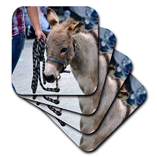 3dRose Susans Zoo Crew Animal - miniature donkey head halter animal - set of 4 Ceramic Tile Coasters (cst_294155_3)