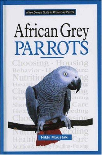 African Grey Parrots Pets - 6