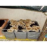 4 pezzi kit coltivazione funghi pleurotus cardoncello substrato panetti funghi,casa giardino