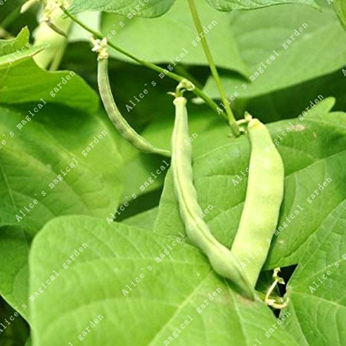 Garden Pots & Planters Zlking 20pcs Red Bean For Home Garden Outdoor Plant