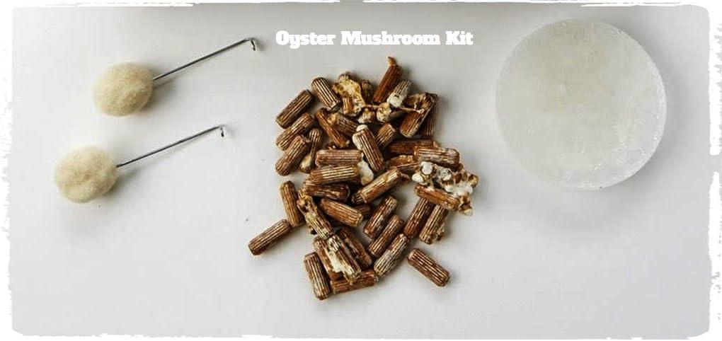 Oyster Mushroom Plug Spawn Starter Kit - Grow Mushrooms at Home