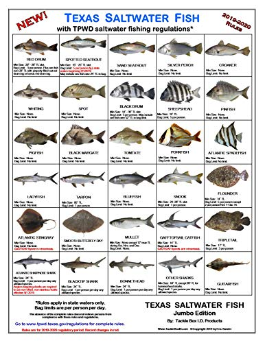 Tackle Box I.D. Texas Saltwater Fish Identification Card - Jumbo Edition - 60 Common Fish - New Sept 2019 TPWD Rules! (Best Fishing In Texas 2019)