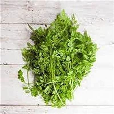 Chervil Herb Seeds, Organic, NON-GMO, 100+ seeds per package