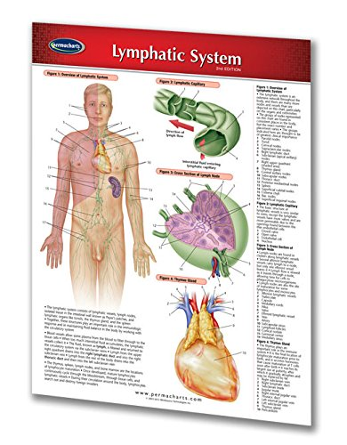 Lymphatic System Guide - Laminated Chart - Medical Quick Reference Guide by Permacharts