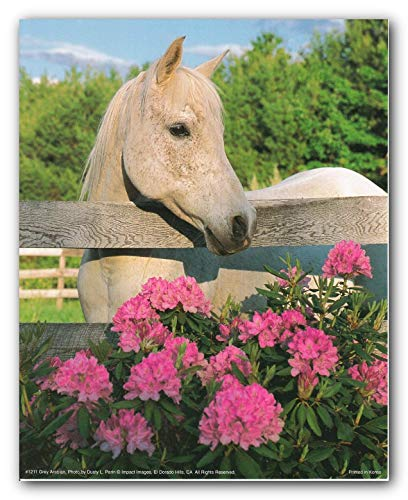 White Morgan Mare Horse with Flowers Wall Decor Art Print Poster (16x20)