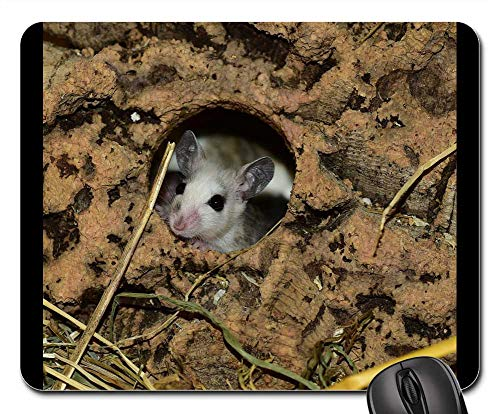 Mouse Pads - Mastomys Mouse Nager Rodent Close Society Pets
