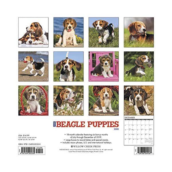Just-Beagle-Puppies-2020-Wall-Calendar-Dog-Breed-Calendar