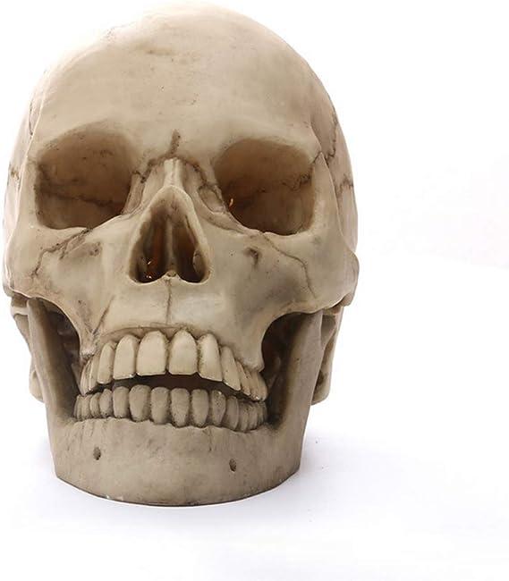 Amazon De Menschliches Schädelmodell Statue Für Anatomie Lebensgröße 1 1 Menschlicher Schädel