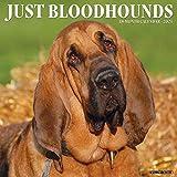 Just Bloodhounds 2021 Wall Calendar (Dog Breed Calendar)