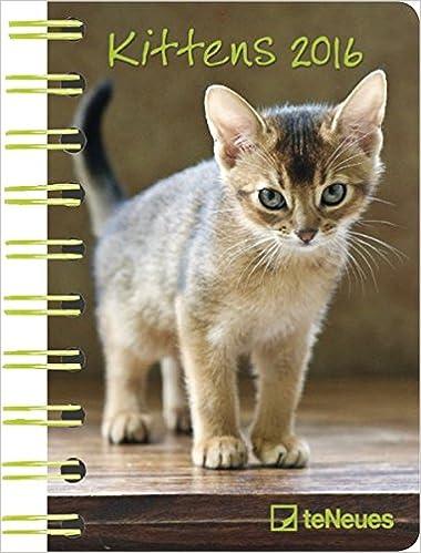 Buchkalender Kittens 2016 Taschenkalender 2016 Katzen , 1 Woche 1 ...