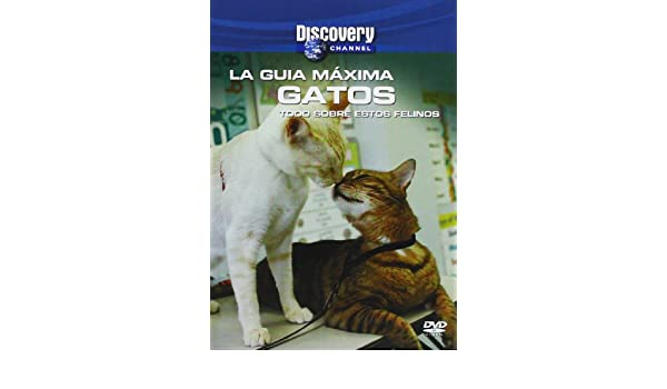 Gatos (Import Movie) (European Format - Zone 2) (2013) (Sin Actores); Karen Partridge: Movies & TV