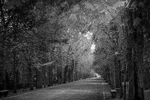 秋の公園の壁紙の壁紙-自然の壁紙-#41453 - 白黒の キャンバス ステッカー 印刷 壁紙ポスター はがせるシール式 写真 特大 絵画 壁飾り50cmx33cm