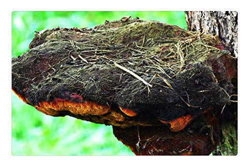 - Indoor Floor Rug/Mat (23.6 x 15.7 Inch) - Mushroom Hub Tree The Parasite Forest Wood Hub