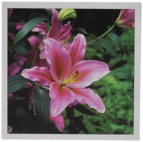 3dRose New York Botanical Gardens, Oriental Lily Bronx Greeting Cards, 6