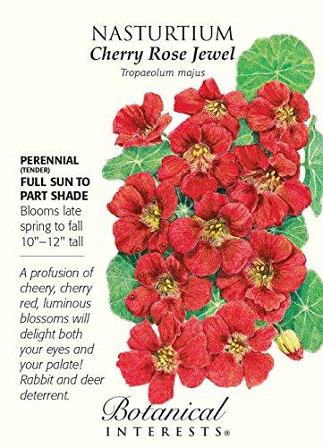 Nasturtium Cherry Rose - 2