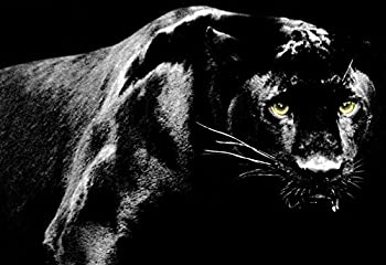 Black Panther Poster, Big Cat, Panther, Jaguar, Leopard