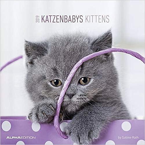 Katzenbabys 2019 Broschürenkalender