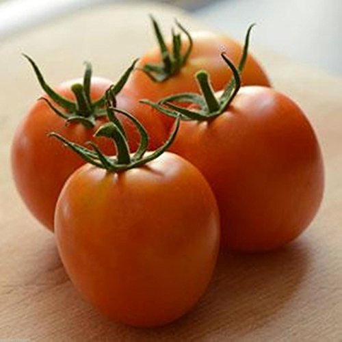 perfect-flame-f1-hybrid-tomato-25-seed-cross-french-heirloom-w-disease-resistant