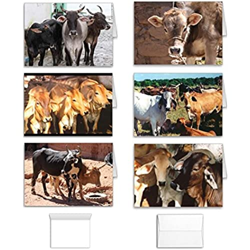 Cow Note Cards Set: Greeting Value Pack of 12 Assorted Blank Inside South America Farm and Ranch Designs, Made Sales