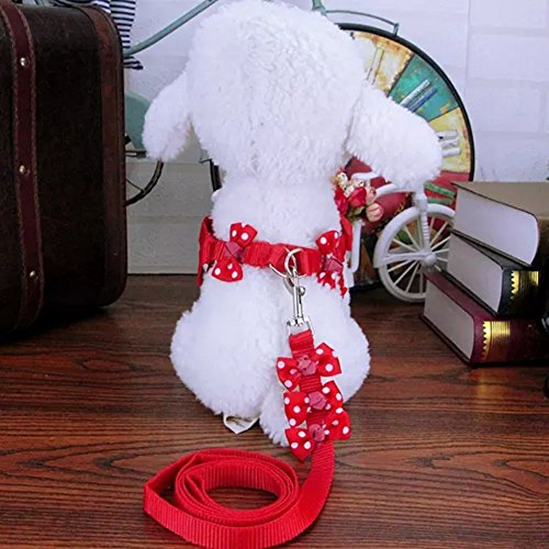 table Harness Nylon Strap Collar with Leash Set with Cute Polka Dots in Bowtie Design Great for Walking Hiking and Training for Small Dog Cat Puppy Kitten Small Animals, Red ()