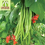 Liveseeds - Runner Beans-Enorma- EXHIBITION VARIETY -20 Finest seeds (half-meter-long pods)
