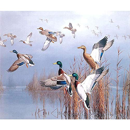 Paint by Number Kits - Lakeside Wild Ducks 16x20 Inch Linen Canvas Paintworks - Digital Oil Painting Canvas Kits for Adults Children Kids Decorations Gifts (No Frame)