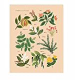 rifle paper co poster - Herbs and Spices Peach Art Print by Rifle Paper Co. (8