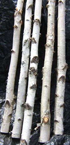 Spirit of the Woods Birch Poles/Logs 1
