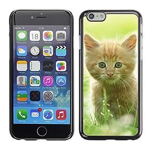 Super Stellar Slim PC Hard Case Cover Skin Armor Shell Protection // V0000916 Cat Kitty Animal Pattern // Apple Iphone 6 PLUS 5.5
