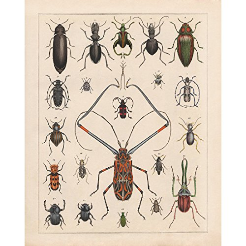 - Meishe Art Vintage Poster Print Insects Collection Identification Reference Chart Species Entomology Diagram Classroom Club Wall Decor