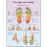reflexology chart laminated - 3B Scientific VR1810L Glossy UV Resistant Laminated Paper Foot Reflex Zone Massage Anatomical Chart, Poster Size 20