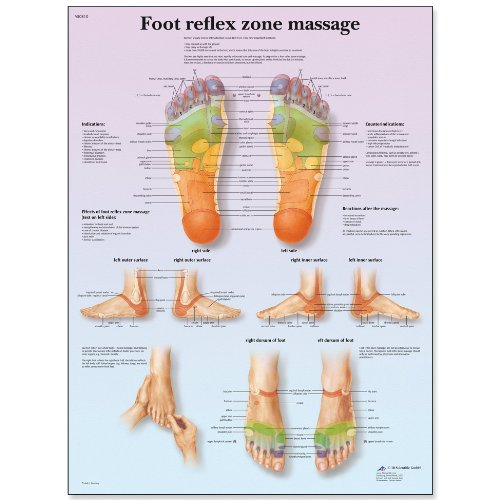 - 3B Scientific VR1810L Glossy UV Resistant Laminated Paper Foot Reflex Zone Massage Anatomical Chart, Poster Size 20