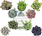 Altman Plants Assorted Live Succulents All Time Favorite Collection Large plants for DIY planters and terrariums, 3.5'', 9 Pack