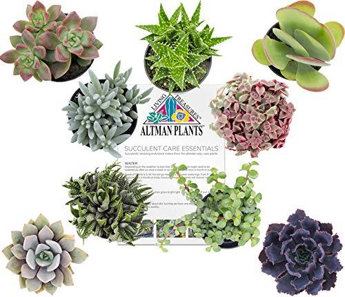 Altman Plants Assorted Live Succulents All Time Favorite Collection Large plants for DIY planters and terrariums, 3.5'', 9 Pack by Altman Plants (Image #1)