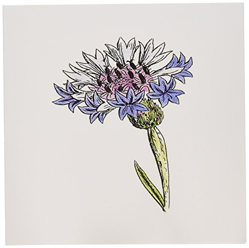 3dRose Picture of 1859 Drawing Of A Thistle Plant - Greeting Cards, 6 x 6 inches, set of 12 (gc_80726_2)