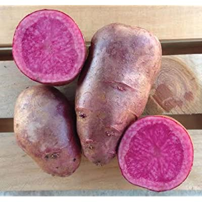 All Red Seed Potatoes, Adirondack Red Potatoes, A beautiful red inside & outside(1 Pound) : Garden & Outdoor