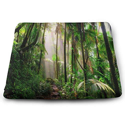 Ladninag Seat Cushion Incredible Tropical Rainforest Plants Chair Cushion Custom Personalized Offices Butt Chair Pads for Indoor