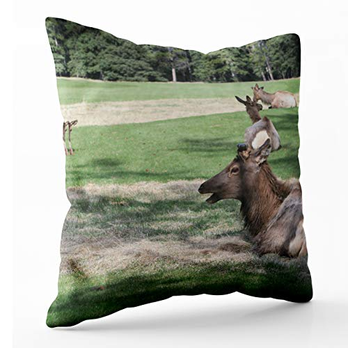 Shorping Decorative Pillow Covers, Zippered Covers Pillowcases 16X16Inch Throw Pillow Covers Deer The Golf Course Springs Hotel Banff for Home Sofa -