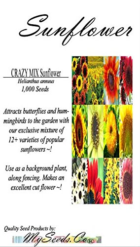 Big Pack - CRAZY MIX Sunflower Seed Mixture (1,000 Seeds) - Over 12 Varieties of SunflowersHelianthus annuus Showy Flowers, Extended Blooms EDIBLE FLOWER Seeds by MySeeds.Co (Big Pack - Sunflower Mix)