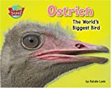 Ostrich: The World's Biggest Bird (Supersized!)