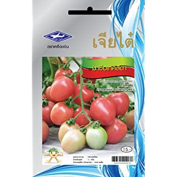 Amazon com : Seeda Tomato (630 Seeds) Seeds - 1 Package From Chai