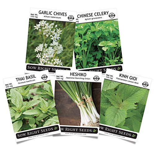 Sow Right Seeds - Asian Herb Garden Seeds for Planting - Individaul Packets of Garlic Chives, Thai Basil, Chinese Celery, Japanese Bunching Onion, Vietnamese Lemon Mint to Plant, Non-GMO Heirloom