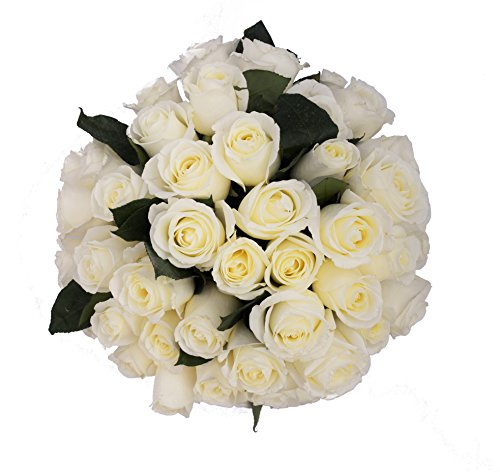 50 Farm Fresh White Roses Bouquet By JustFreshRoses | Long Stem Fresh (50 Rose)