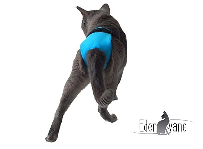 Bragas/pañal para gatos machos de cría - Las bragas EXPRESS por EDENVANE