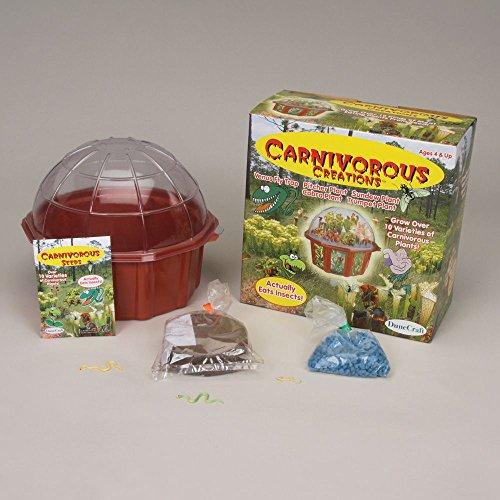 Carnivorous Creations Kit Carnivorous Creations Terrarium Kit