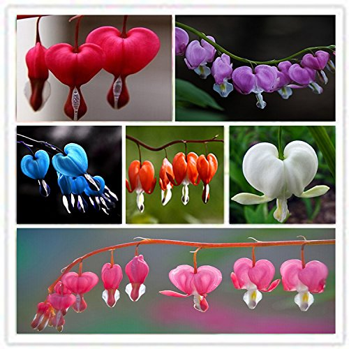 ADB Inc 7 Type 2015 HOT Sale 150pcs Heart Flower Seeds Dicentra Spectabilis Sweet Heart (Heart 01 Mix)