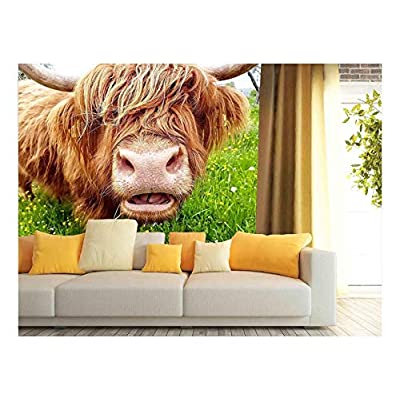 Made For You, Elegant Artistry, Close up of Grass Chewing Highland Cow on a Green Meadow which Tries to Look Through its Head of hai